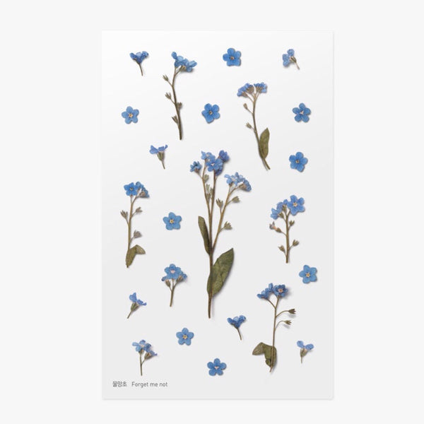 Pressed Flowers Sticker - Forget Me Not