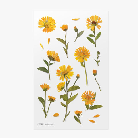 Pressed Flowers Sticker - Calendula