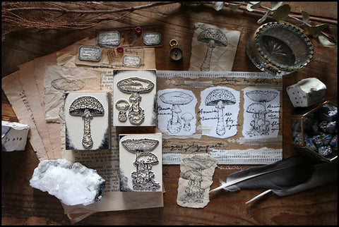 LCN Fungus Stamp Set B