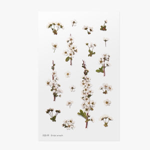 Pressed Flowers Sticker - Bridal Wreath