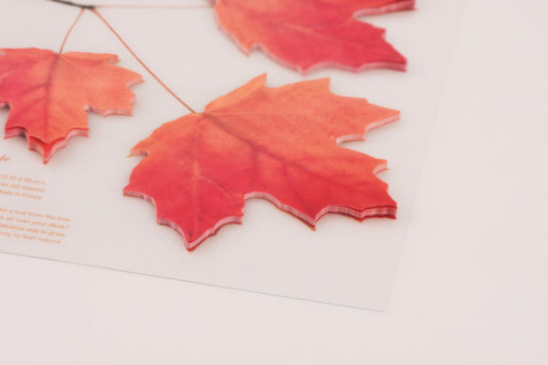 Sticky Leaf Maple (2 Colors)