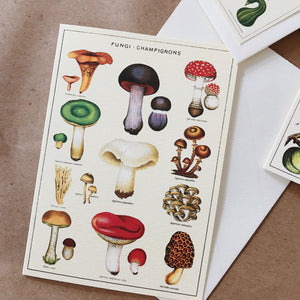 Cavallini Pocket Card - Fungi