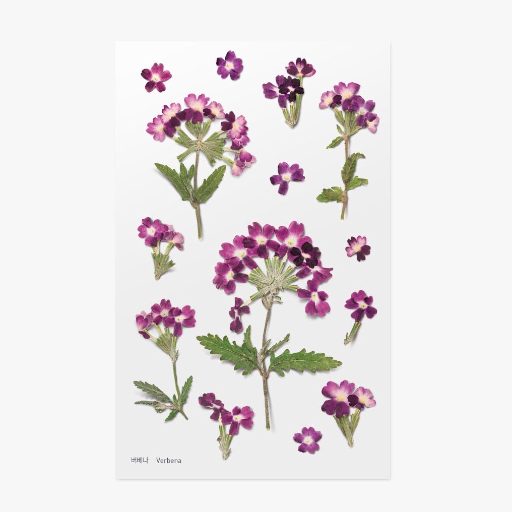 Pressed Flowers Sticker - Verbena