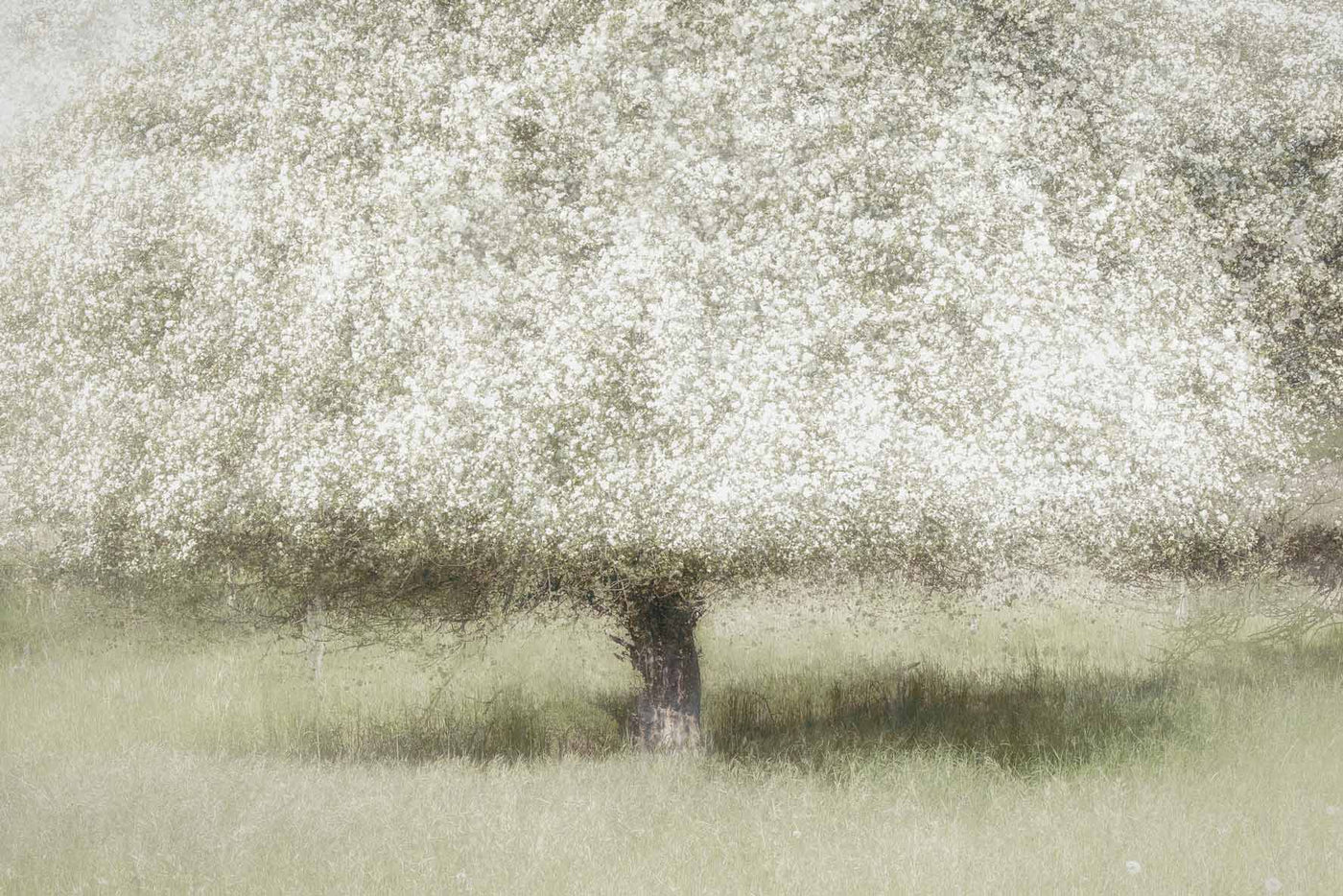 nature & landscapes wallpaper murals.