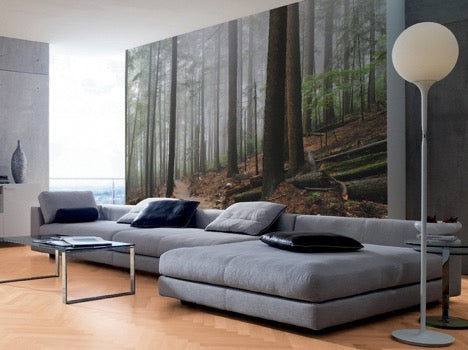 Foggy Forest and Hiking Trail Wall Mural, eazywallz.eu