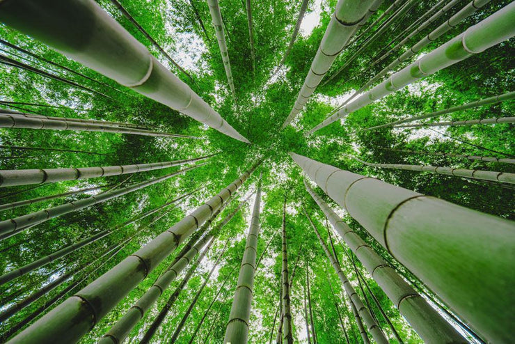 Green Bamboo Forest Wallpaper Mural