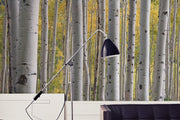Aspen Birch Trees Wall Mural-Landscapes & Nature-Eazywallz
