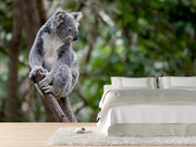 Australian koala Wall Mural-Animals & Wildlife-Eazywallz