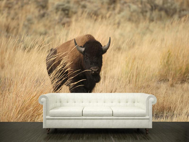 Bison on Yellowstone Wall Mural-Animals & Wildlife-Eazywallz