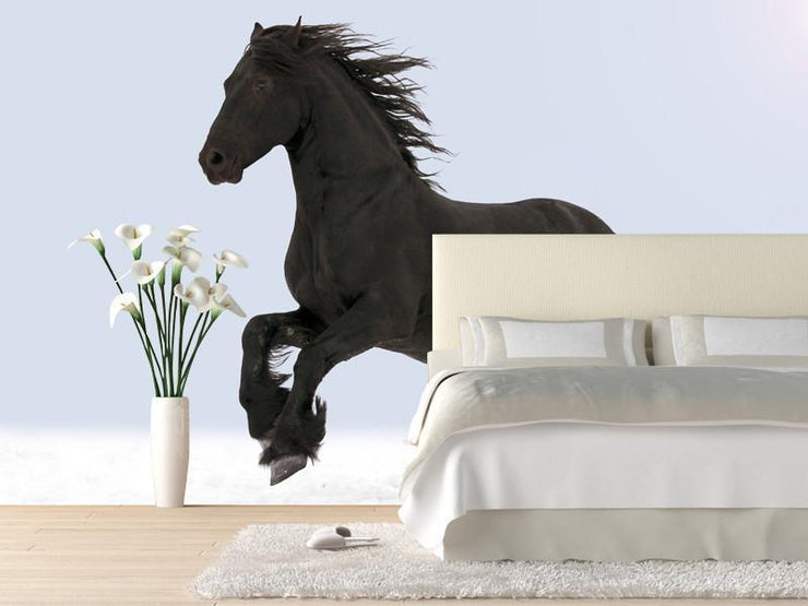 Black horse Wall Mural-Animals & Wildlife-Eazywallz