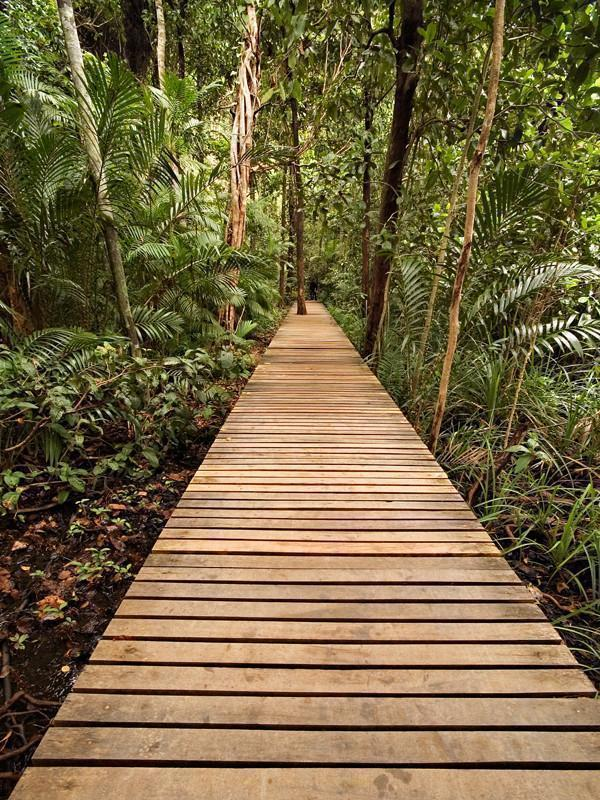 Board walk in the jungle Wall Mural-Landscapes & Nature-Eazywallz