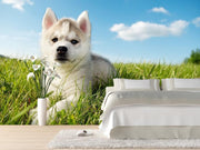 Cute puppy husky Wall Mural-Animals & Wildlife-Eazywallz