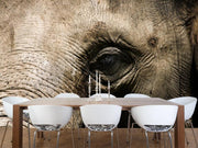 Elephant close up Wall Mural-Animals & Wildlife-Eazywallz