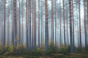 Foggy Morning Forest Wall Mural-Landscapes & Nature-Eazywallz