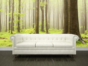 Forest in spring Wall Mural-Landscapes & Nature-Eazywallz