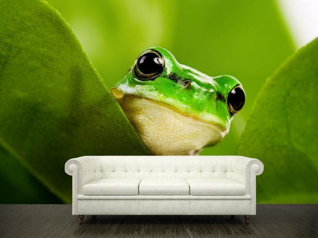 Frog peeking out Wall Mural-Animals & Wildlife,Macro-Eazywallz