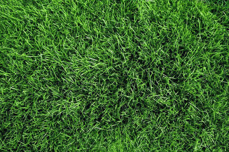 Green grass field Wall Mural-Textures-Eazywallz