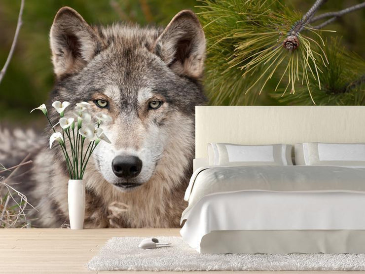 Intense timber wolf Wall Mural-Animals & Wildlife-Eazywallz