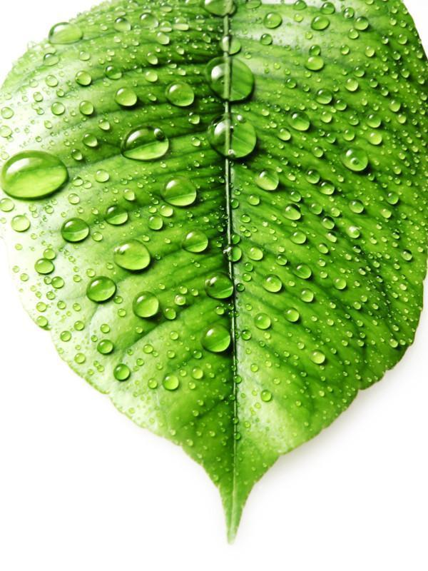 Leaf with fresh water drops Wall Mural-Macro,Textures-Eazywallz