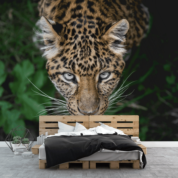 Leopard Eyes Wall Mural-Animals & Wildlife-Eazywallz