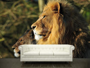 Lion king and his queen Wall Mural-Animals & Wildlife-Eazywallz
