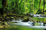 Mountain stream in a forest Wall Mural-Landscapes & Nature-Eazywallz