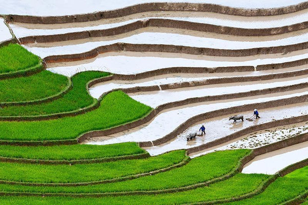 Plowing the Fields Wall Mural-Landscapes & Nature-Eazywallz