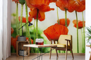 Poppy flowers Wall Mural
