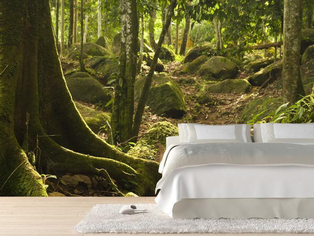 Rainforest Wall Mural-Landscapes & Nature-Eazywallz