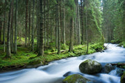 Rapid River in a Mountain Forest Wall Mural-Landscapes & Nature,Staff Favourite Murals-Eazywallz