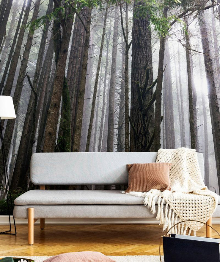 Redwood Forest Wallpaper Mural-Landscapes & Nature-Eazywallz