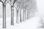 Snow Covered Park in St.Petersburg Wall Mural-Landscapes & Nature-Eazywallz