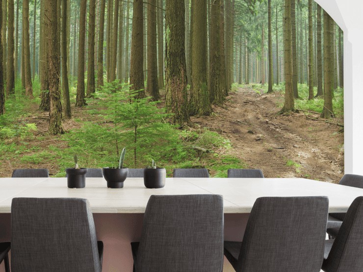 Spruce and Beech Trees Panoramic Wall Mural-Landscapes & Nature,Panoramic-Eazywallz