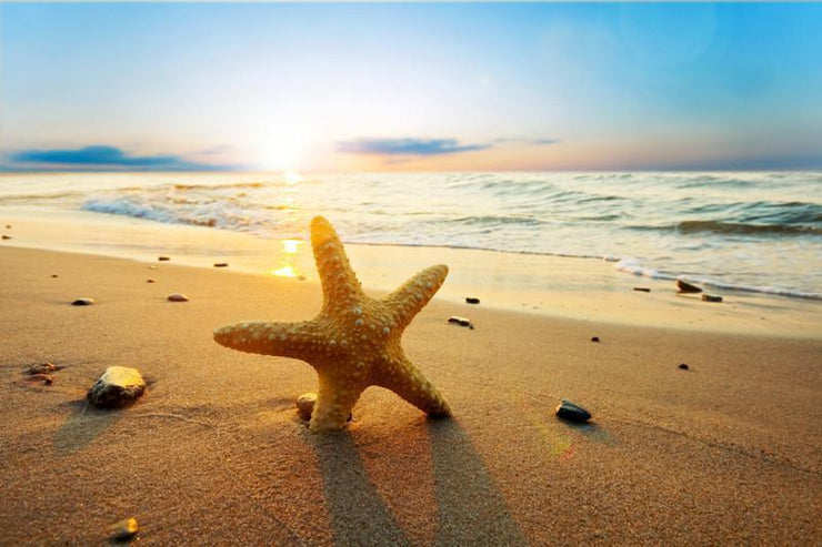 Starfish at sunset Wall Mural-Animals & Wildlife,Tropical & Beach,Landscapes & Nature-Eazywallz