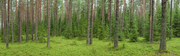 Summer Forest Panoramic Wall Mural-Landscapes & Nature,Panoramic-Eazywallz