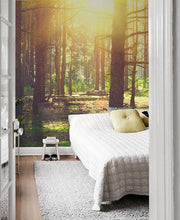 Sunlight in Old Forest Wall Mural-Landscapes & Nature-Eazywallz