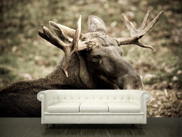 swedish moose Wall Mural-Animals & Wildlife-Eazywallz