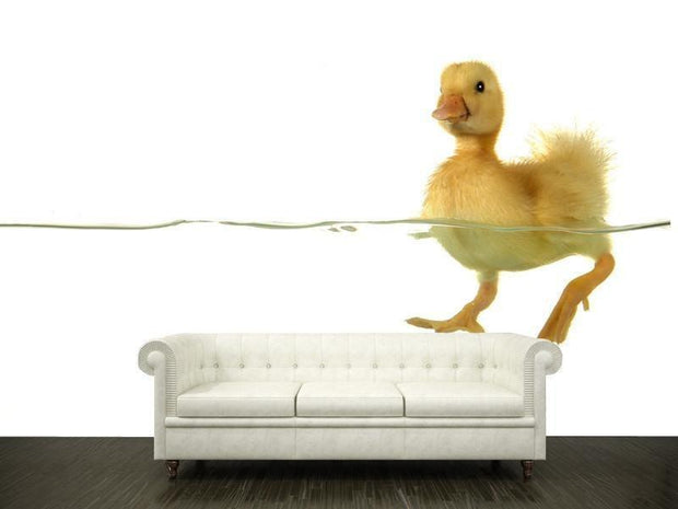 Swimming duck Wall Mural-Animals & Wildlife-Eazywallz