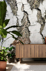 Birch Bark Wallpaper Mural