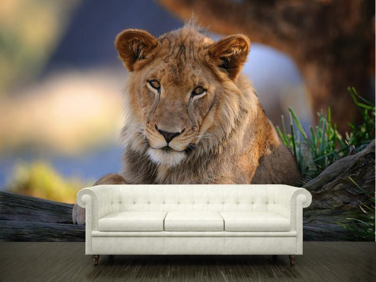The lion Wall Mural-Animals & Wildlife-Eazywallz