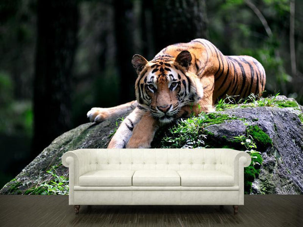 Tiger Wall Mural-Animals & Wildlife-Eazywallz