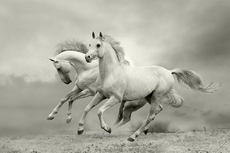 White Horses in the Summer Wall Mural-Animals & Wildlife,Black & White-Eazywallz