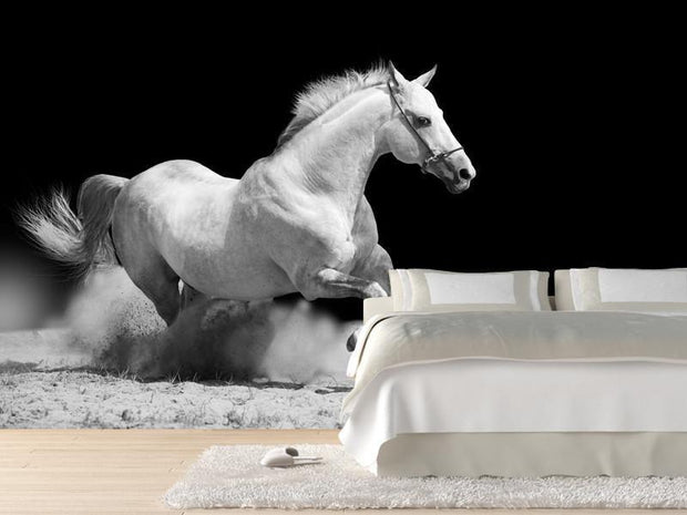 White Stallion Wall Mural-Animals & Wildlife,Black & White-Eazywallz