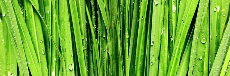 Wide Green Grass Closeup Wall Mural-Macro,Textures,Panoramic,Best Seller Murals-Eazywallz