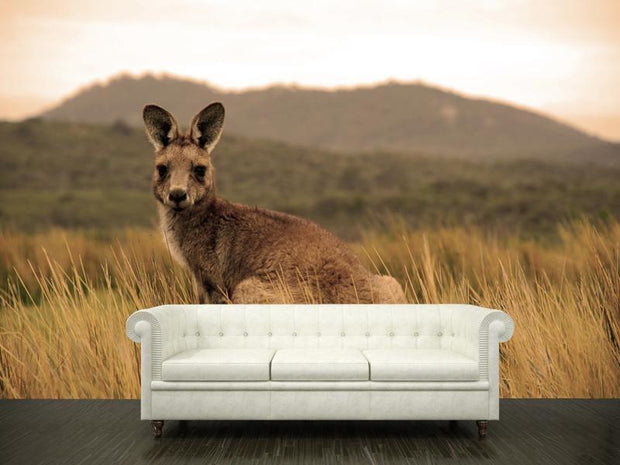 Wild kangaroo in outback Wall Mural-Animals & Wildlife-Eazywallz