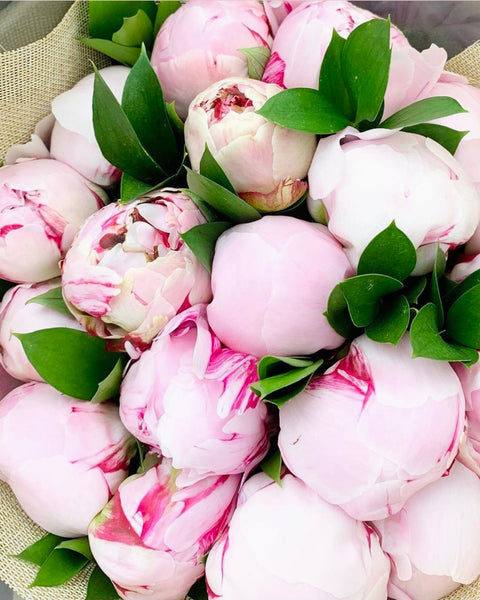 Buy peonies online for delivery Oakville Florist