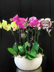 THE WOW FACTOR - Upright Orchid - Assorted
