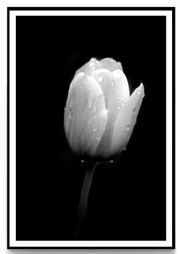 Black and White Beauty Canvas