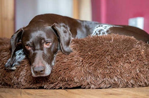 MONTEES - Brown Fluffy Round Donut Dog Bed