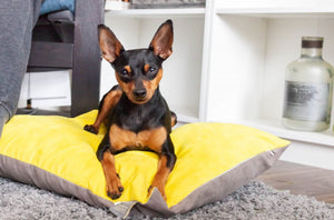 LINUS - Two Tone Suede Dog Cushion Bed
